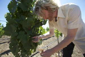 pressing grapes into wine glass_Blog