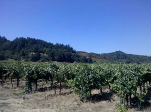 Preston Vineyards 2